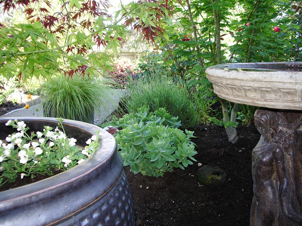 garden, yard design